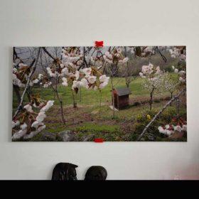 Quadre Photo PVC Light et impression décor printemps en colline